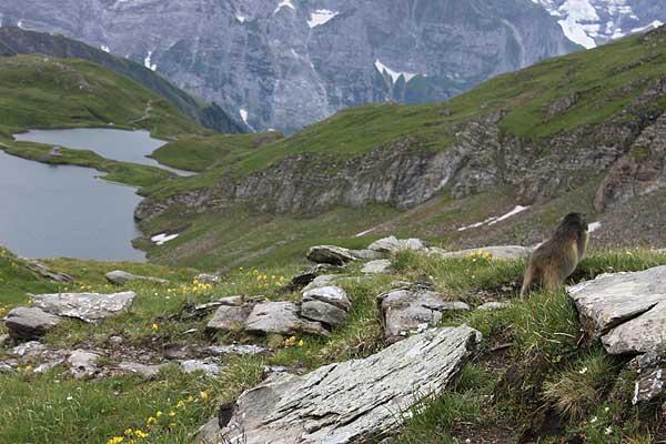 de italienske alper